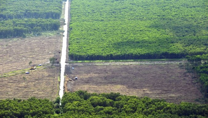 Interpols vēršas pret nelegālo mežciršanu; plašā operācijā Dienvidamerikā gandrīz 200 aizturēto