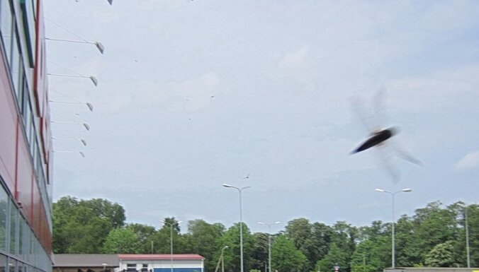 Pāris dienas Liepājai uzbruka spāres (video)