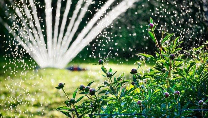 Tveice dārzā: padomi augu un mauriņa laistīšanai karstajā laikā