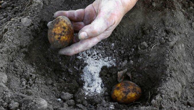 Lietderīgie kurināšanas pārpalikumi – pelni un to izmantošana dārzā