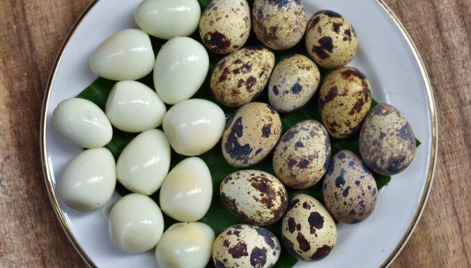 Kā pareizi izvārīt un nolobīt paipalu olas: pārbaudīti triki
