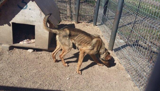 На хуторе нашли измученную голодом и жаждой собаку