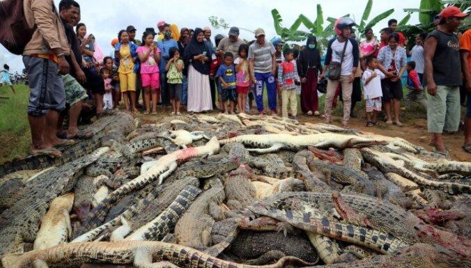 Foto: Indonēzijā saniknots pūlis nogalinājis 292 krokodilus