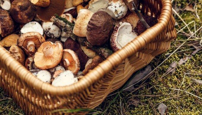 Грибной сезон: куда рижанам отправиться по грибы?