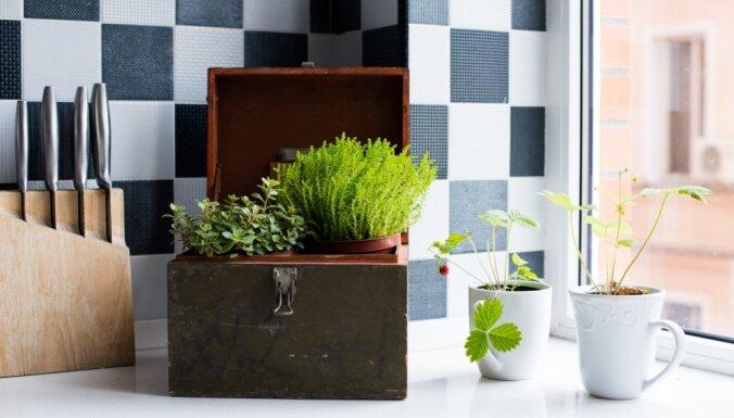 ТОП-5 растений, которым понравится у вас на кухне