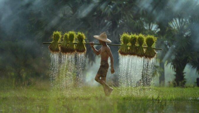 Смерть по страховке: Таиланд заставит платить всех туристов