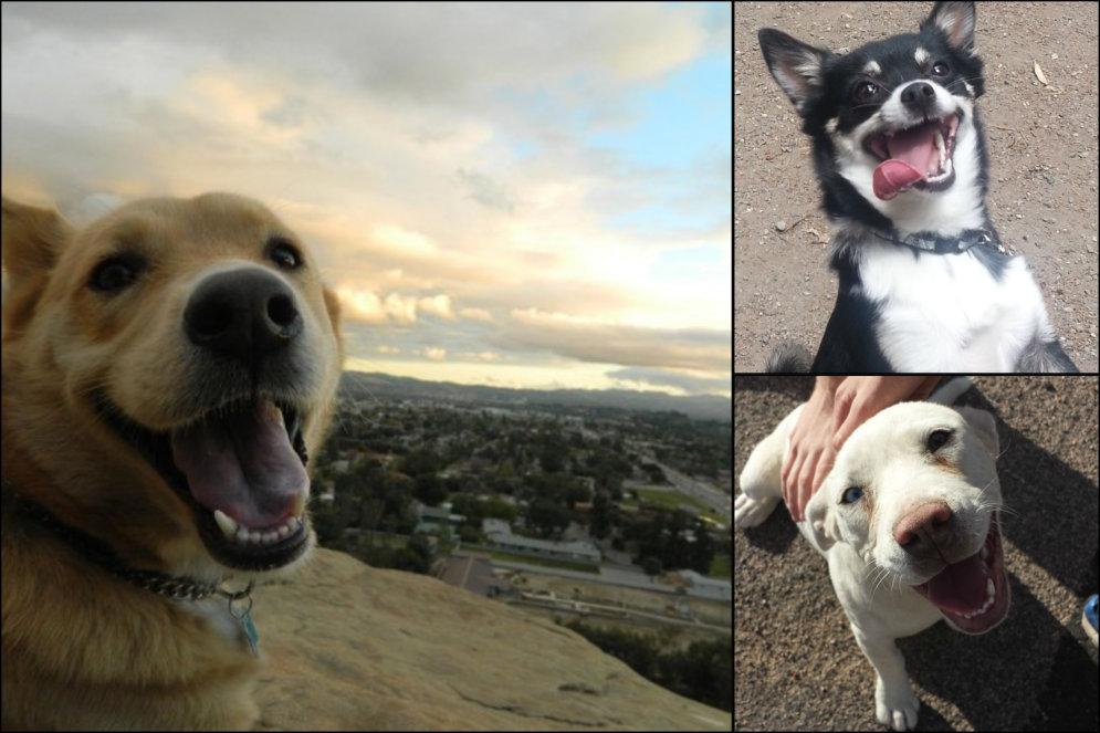 ФОТО, ВИДЕО: Просто 14 собак, которые в восторге от того, что снова видят тебя!