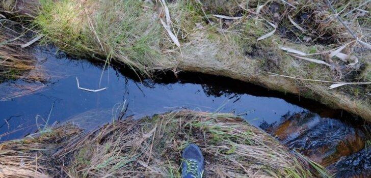 Piedzīvojums biroja darbiniekiem – pārgājiens pa Kangaru purvu mežiem