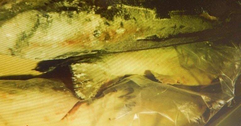 """Россия вернула в Латвию 18 тонн лосося, выловленного в """"фальшивую"""" дату"""