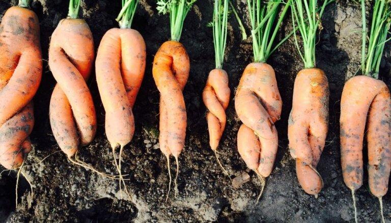 Lauksaimnieki aicina noteikt 5% PVN augļiem un dārzeņiem