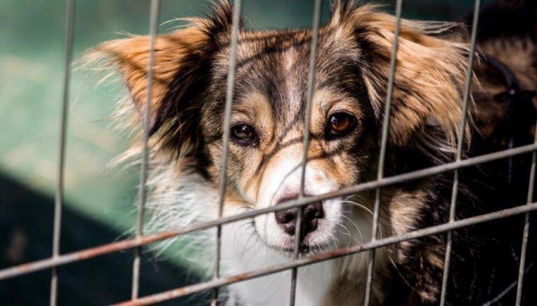 Mīti un patiesības par patversmes dzīvnieku adopciju