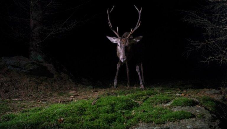 Nakts pārgājienā varēs iepazīt Līgatnes dabas taku zvērus tumsā