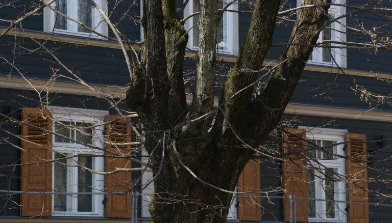 Жители Агенскалнса просят не вырубать деревья ради строительства магазина Lidl