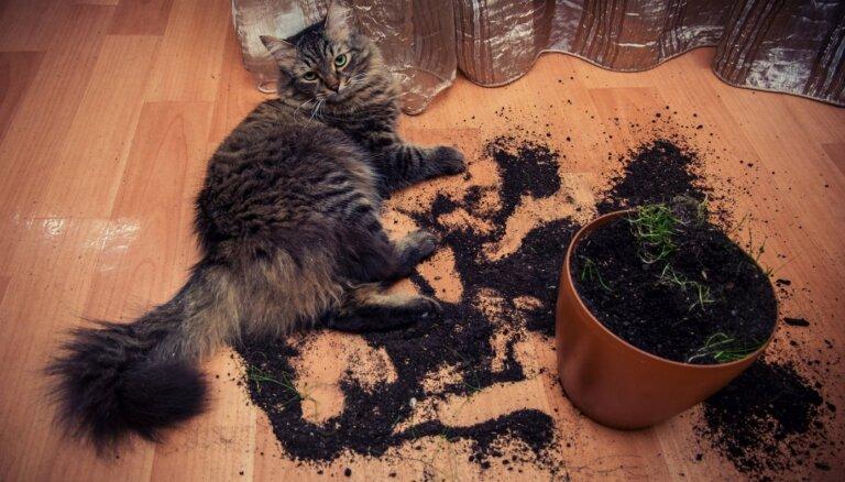 Kaķis kašājas pa podiem – kā glābt zaļos draugus?