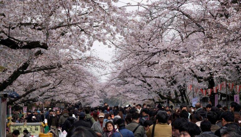 Japānā atcelti tradicionālie ķiršu ziedēšanas svētki