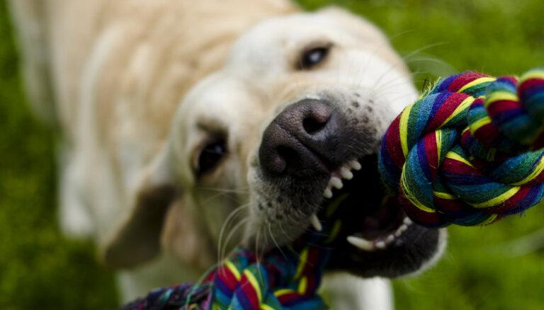 Как истолковать язык тела у собак? Советы специалистов