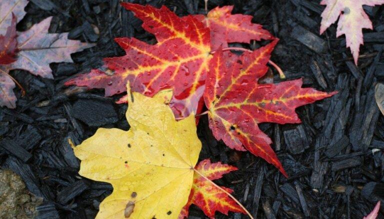 Лунный календарь для садовых работ на 26-30 ноября 2018 года