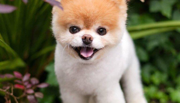 ФОТО: Умерла самая очаровательная собака в мире. Ее сердце было разбито