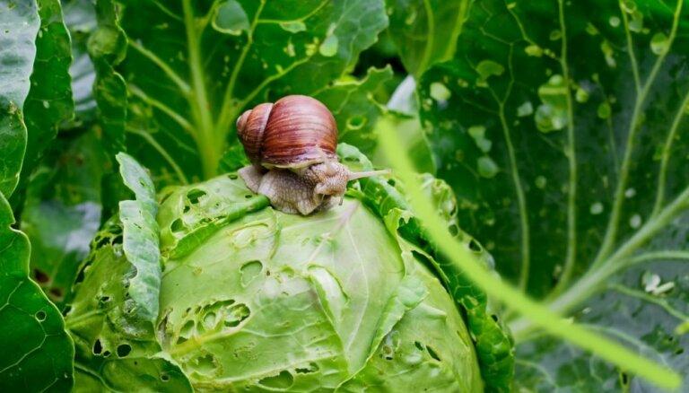 Kad gliemeži dārzā ir līdz kaklam – problēmas un risinājumi