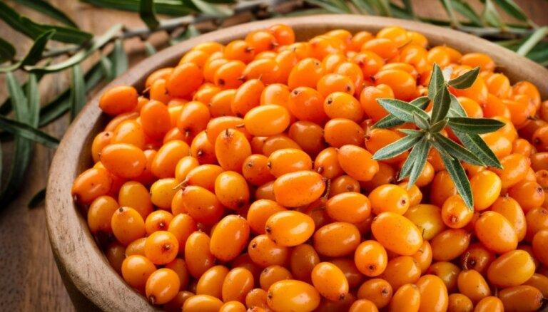 Чудо-ягода: 180 полезных веществ и другие причины любить облепиху