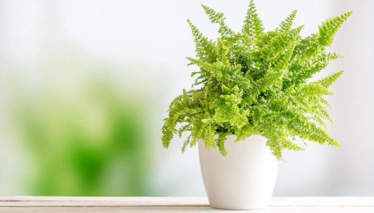 """Пловцы со стажем: ТОП-5 комнатных растений, которые невозможно """"залить"""""""