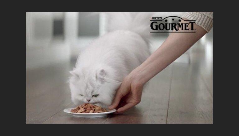 Три новых блюда в палитре вкусов Gourmet Gold