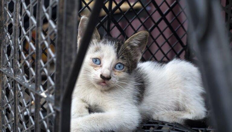 PVD no dzīvokļa Purvciemā izņem 32 kaķus, kas turēti nepiemērotos apstākļos