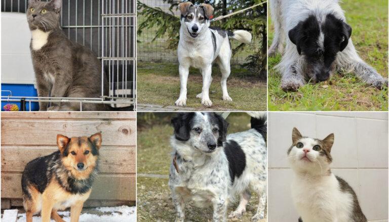 Draiskulīgi, mīļi un draudzīgi: četri suņi un trīs kaķi gaida savus saimniekus