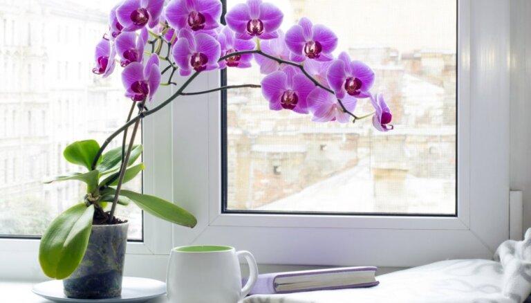 Дома не цветет орхидея. Что делать?