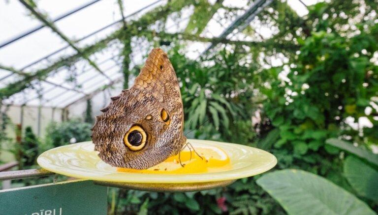 Aicina skolēnus apmeklēt LU Botānisko dārzu