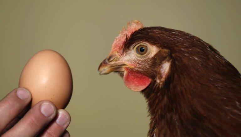 Ассоциация: из-за птичьего гриппа рынок Латвии может оказаться перенасыщен польскими яйцами и курятиной