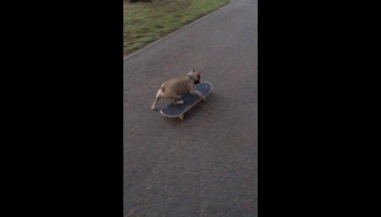 ВИДЕО: Ничего особенного, просто французский бульдог на скейте в рижском парке