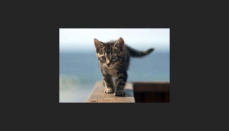 Biežākās traumas kaķiem vasarā un pirmā palīdzība