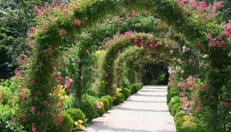 Greznā rota dārzā – ziedu arkas. Padomi to izveidei