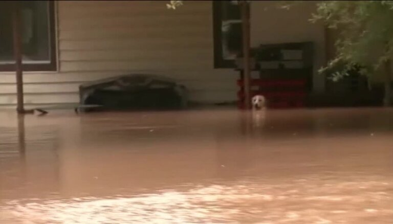 Video: ASV glābēji pēdējā brīdī izglābj slīkstošu suni