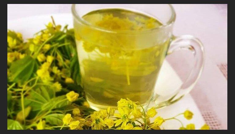 Dabas 'viagra' – kļavu ziedi: kā pareizi ievākt un izmantot veselīgo pavasara velti