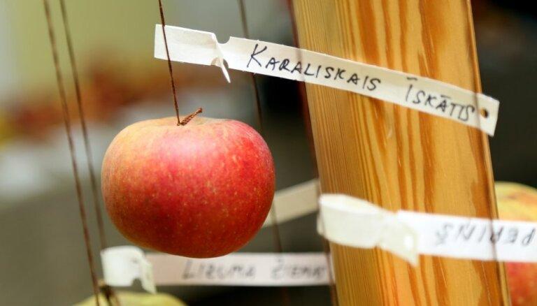 Foto: Dabas muzejā gozējas Latvijas sārtvaidži - āboli