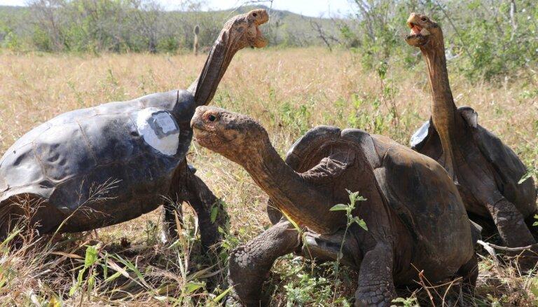 Самец черепахи Диего спас свой вид от вымирания и возвращается в дикую природу