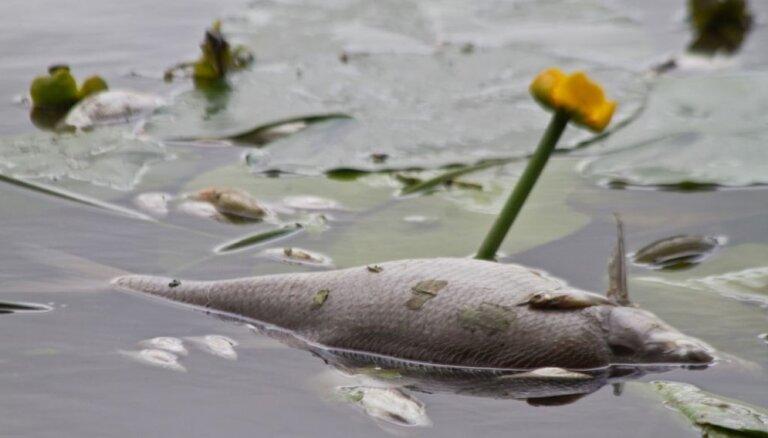Saistībā ar piesārņojumu Šlokenbekas ezerā 'Puratos Latvia' samazinājusi ražošanas jaudas