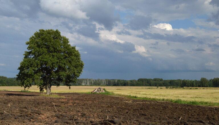 'Zemnieku saeima': provizoriskais dārzeņu ražas zudums šogad varētu būt apmēram 30%