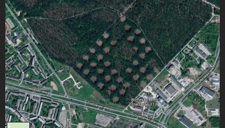 Foto: Aculiecinieku mulsina īpatnēji 'robi' Biķernieku mežā
