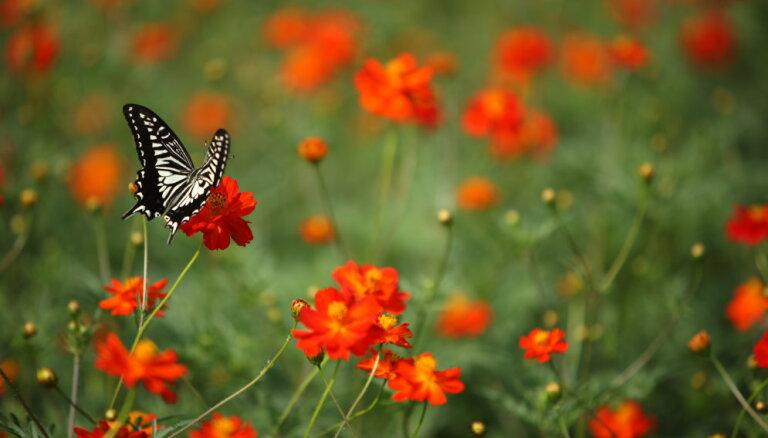 Почему тараканов и мух становится больше, а бабочек и пчел - меньше?