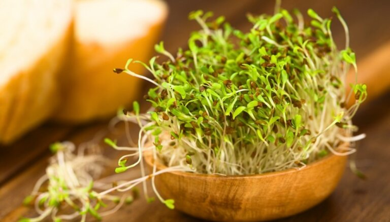 Vitamīnu lādiņš ziemā: no speciālistu knifiņiem līdz ieteikumiem dīgstu audzēšanā