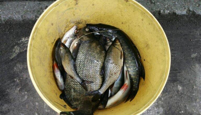 'Preiļu siera' avārija - Feimankas upē iet bojā zivis; VVD nav informēts