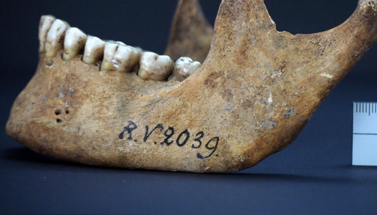 Экземпляр RV 2039. В скелете, найденном в Латвии, обнаружили самый древний штамм чумы