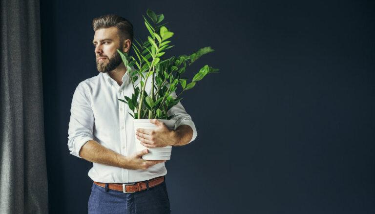 Как спасти комнатное растение, у которого желтеют листья