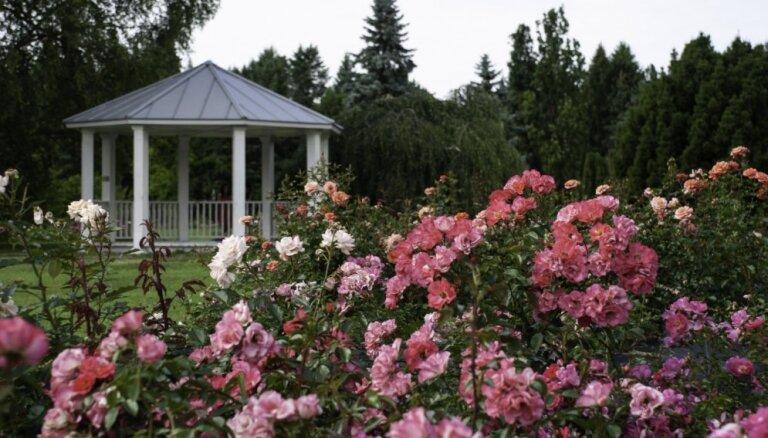 Foto: Nacionālajā botāniskajā dārzā pilnā sparā zied rozes un lilijas