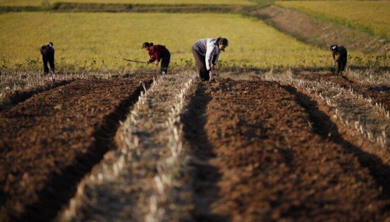 Sliktās ražas dēļ Ziemeļkorejā miljoniem cilvēku trūkst pārtikas, ziņo ANO