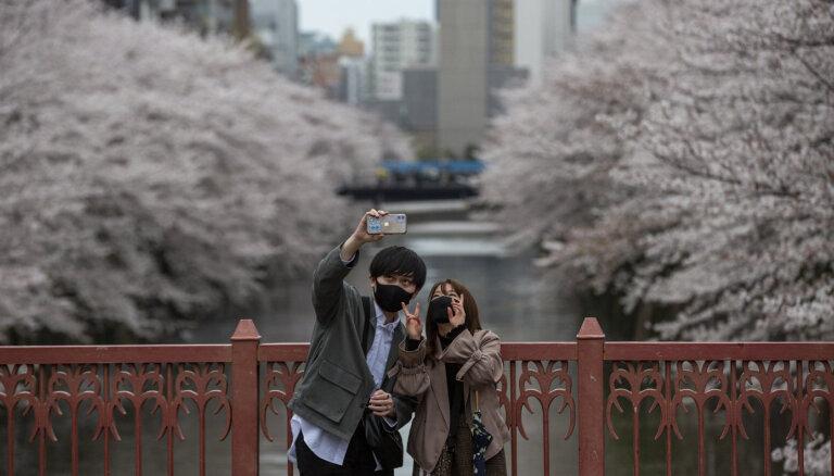 В Японии 1200 лет записывают даты цветения сакур. Они никогда не цвели настолько рано
