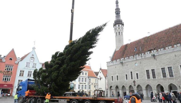 ФОТО. Эстонцы первыми среди балтийских стран установили в Таллине главную елку страны